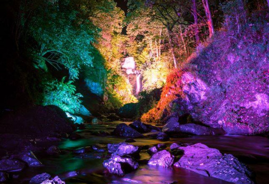 The forest at Aberfoyle lit up at night time with bright colours