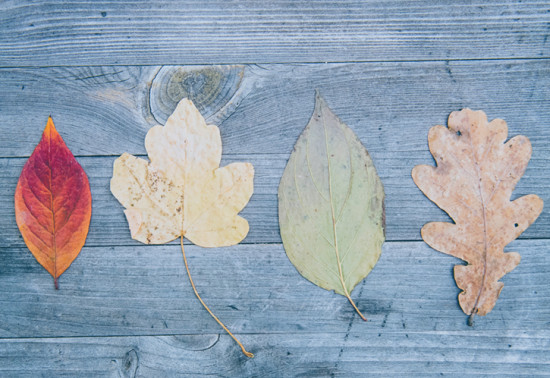Press play: How to preserve leaves and plants