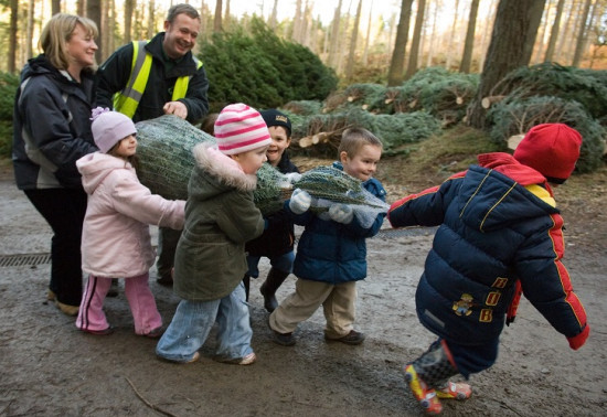 'Tis the season! Christmas Tree Sales Centres open from 29 November