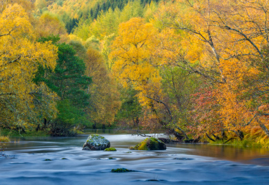 Yellow, orange and green-leaved trees overhanging a river