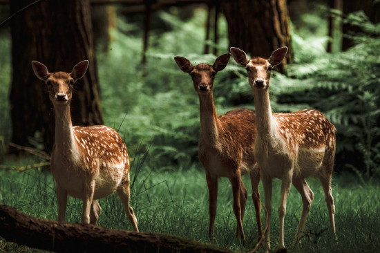 Where to spot wildlife in Scotland's forests