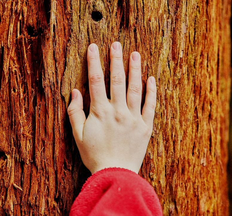 Close-up of a hand held against the bark of a tree