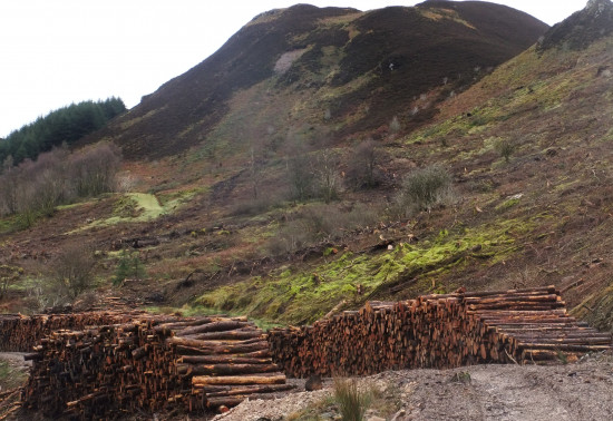 Timber stacks at base of mountain