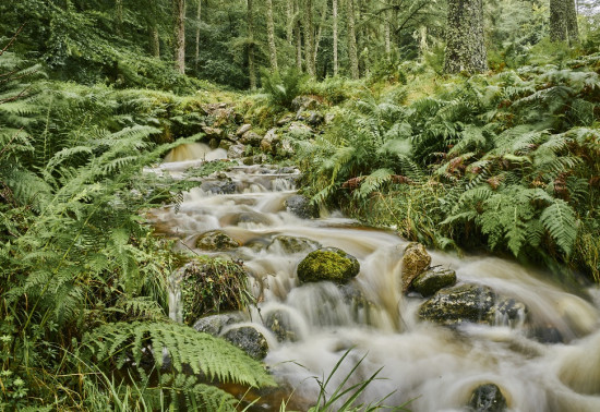A river surrounded by trees and ferns