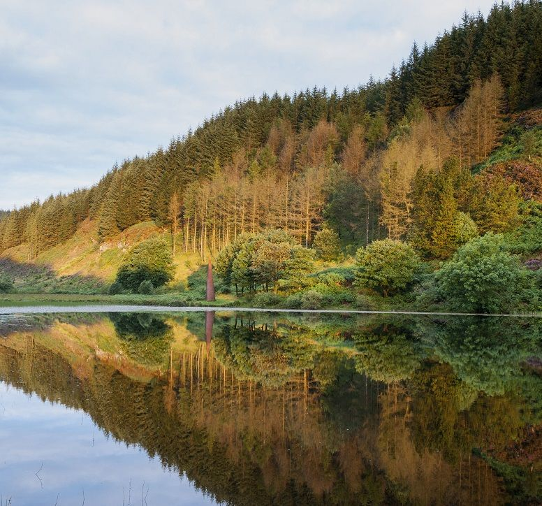 Hill of trees reflected in loch