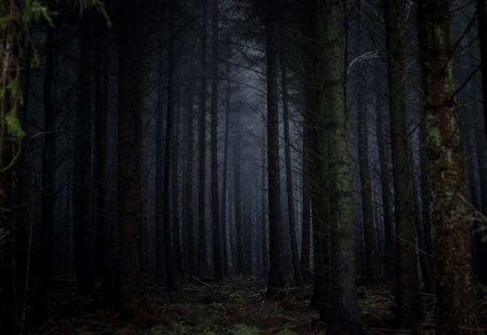 Dark trees in a forest at night