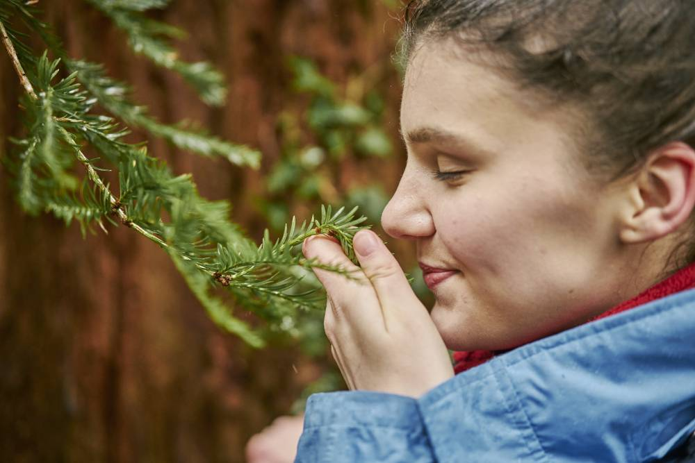 Girl sniffing the needles of a spruce tree