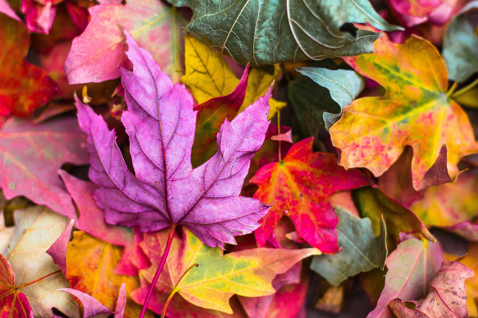 Varied collection of brightly coloured leaves