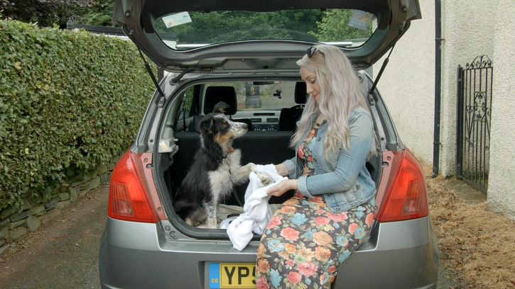 Woman washing dog's paws in the back of her car