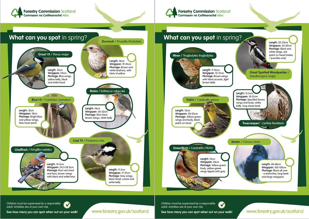 Compilation image of different birds and text showing various information about them