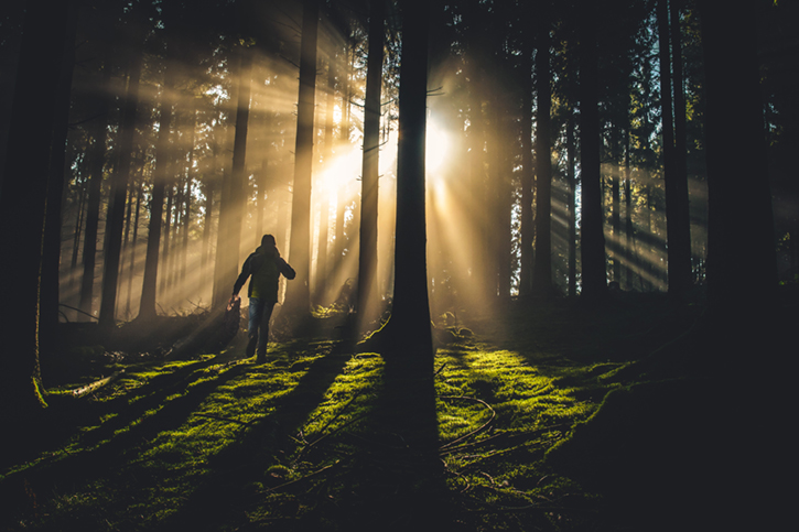Low sunlight shining into forest causing trees to become silhouettes, and a person walking away from the camera on green undergrowth