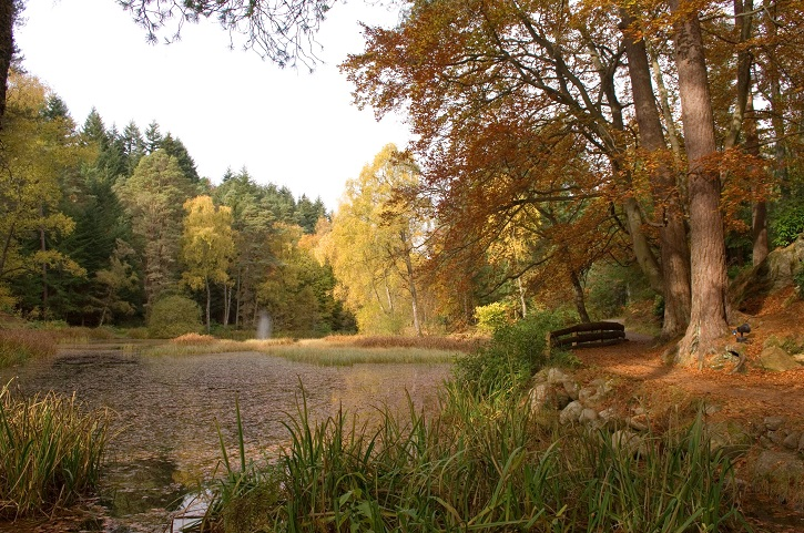 Woods in autumn with a pond and bridge