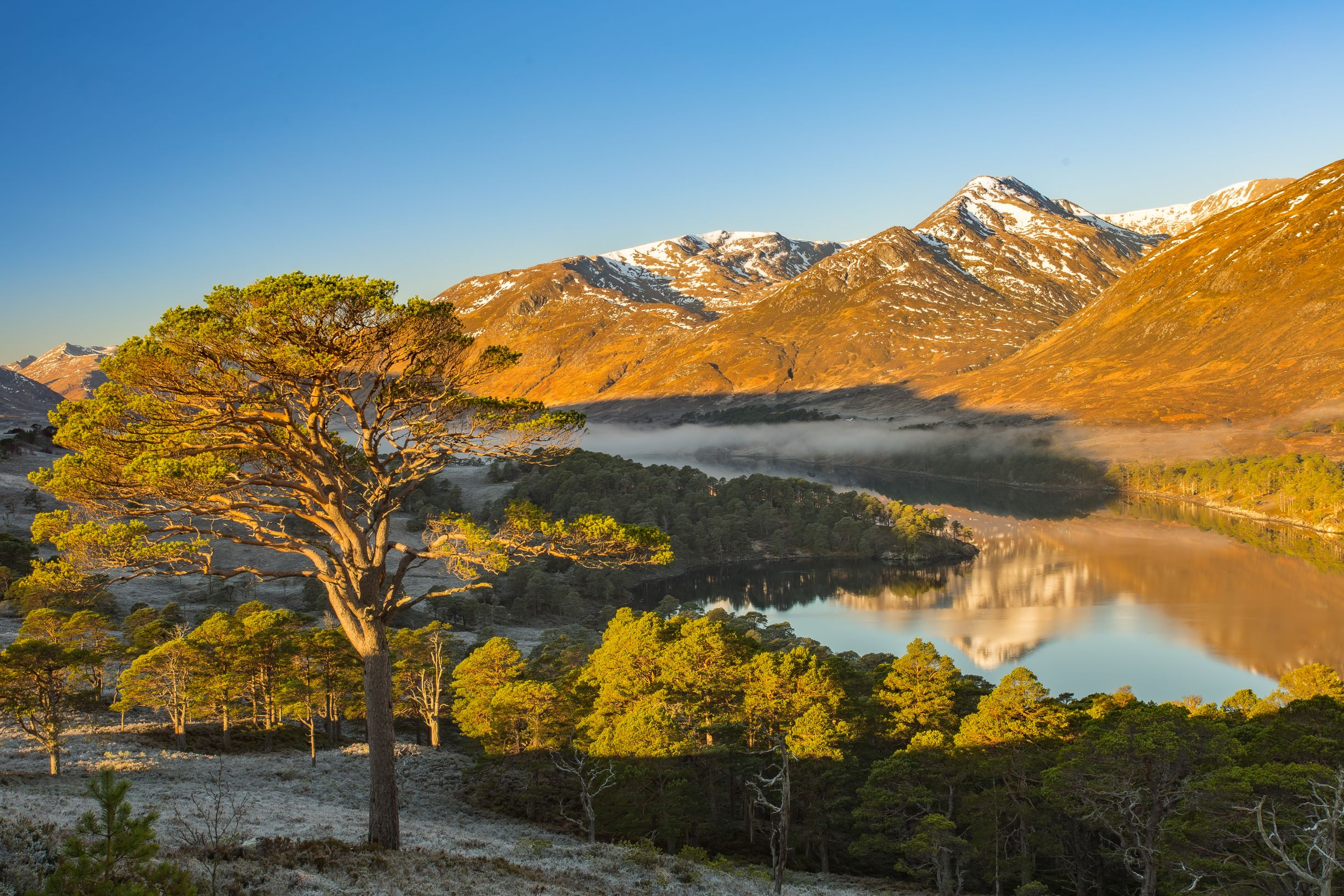 A single tree overlooking a misty glen surrounded by mountains at Glen Affric © Colin Leslie