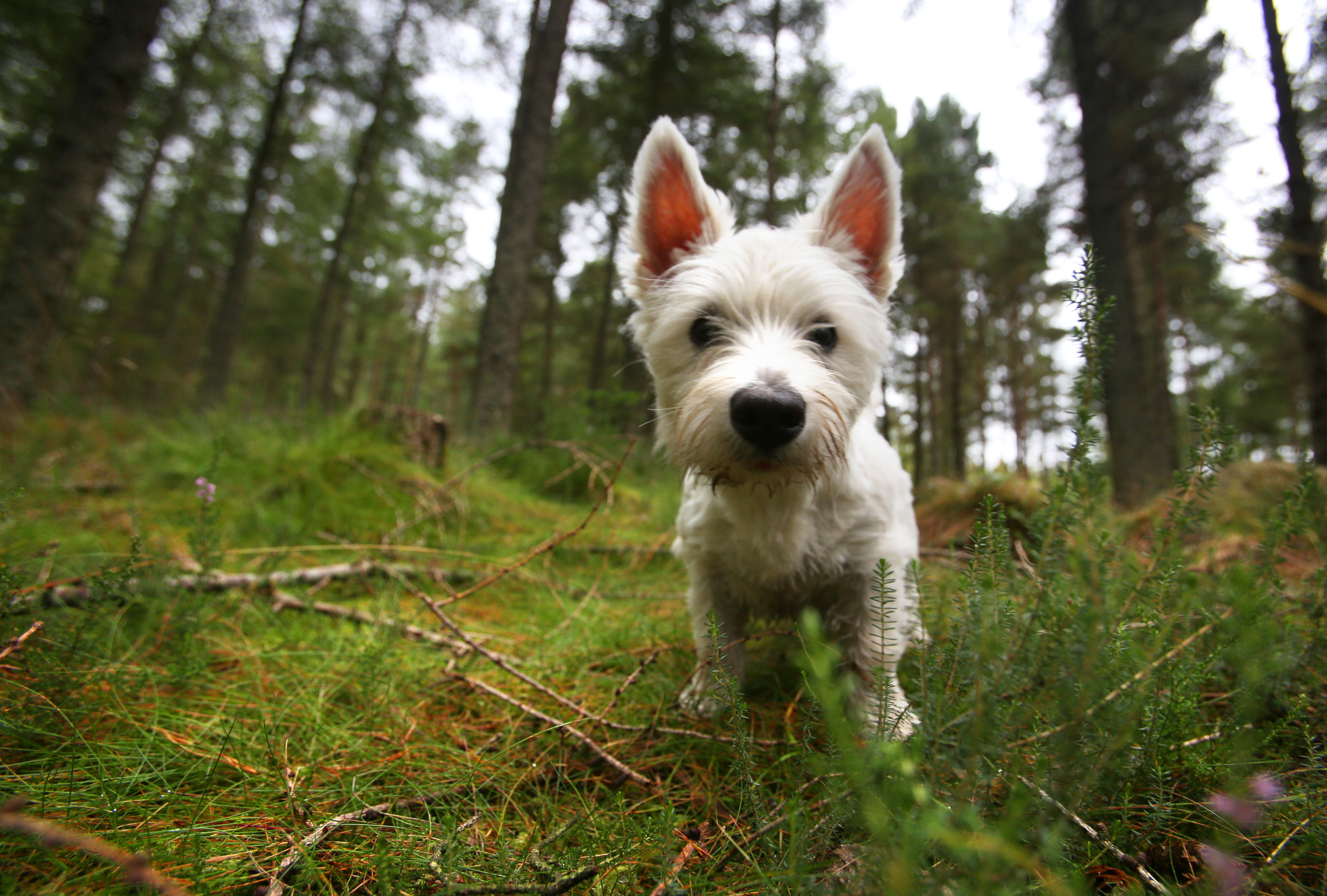 Small white dog in the forest