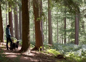 Dog walker at Cardrona Forest