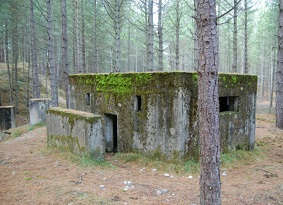World War Two bunker in a woodland