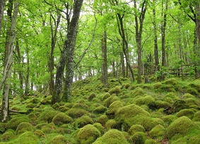 Bright green trees and mosses