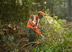 Man cutting a rhododendron bush with a chainsaw