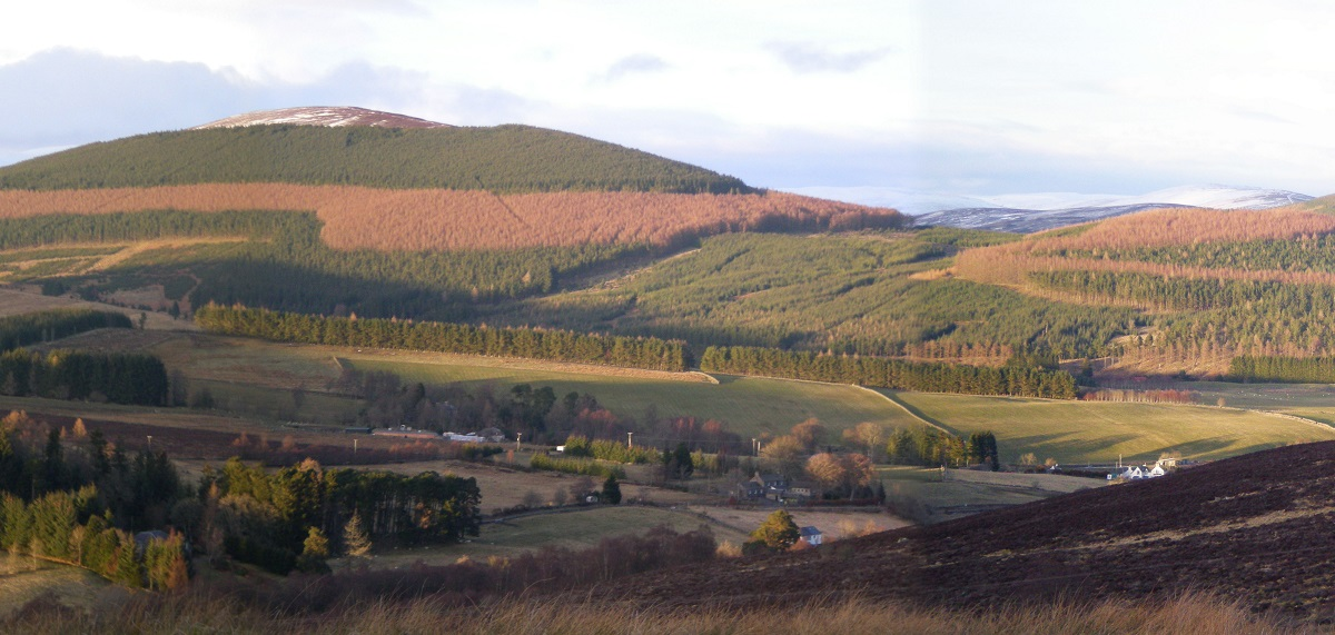 Distant view of the hillside forests of Glenisla