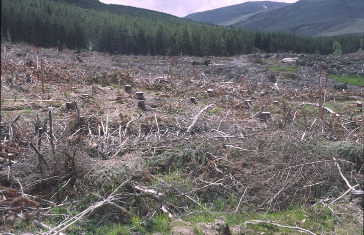 Clear-felled site at Glen Affric in 2000