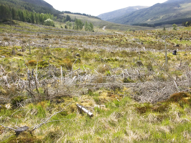 Site at Glen Affric in 2005 as wild plants start to grow