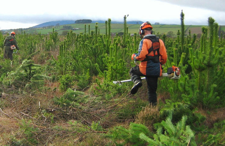 Cutting trees for regeneration of lowland raised bogs