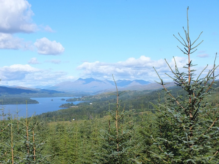 View from the forest over Loch Awe