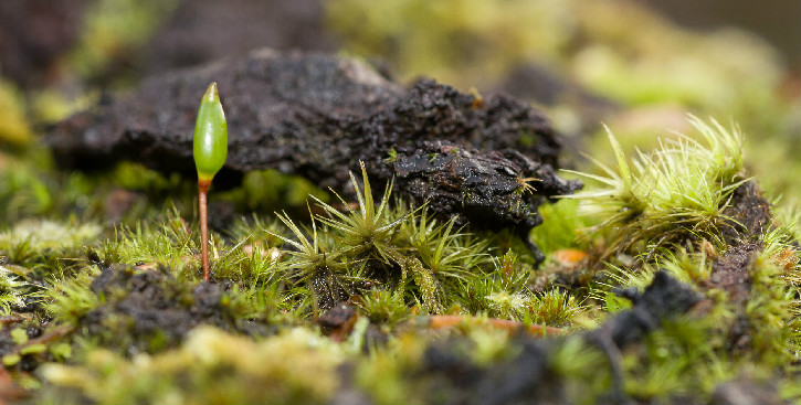 Close up of forest floor showing green mosses and single growing green leaf poking up from moss