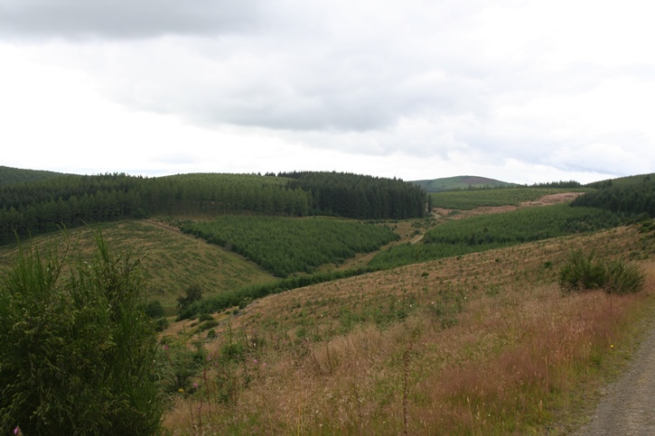 Small valley with one side wooded with coniferous trees and the other with wild brown grasses
