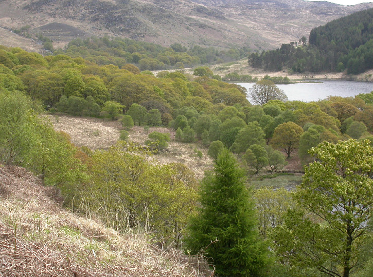 galloway core forest sites