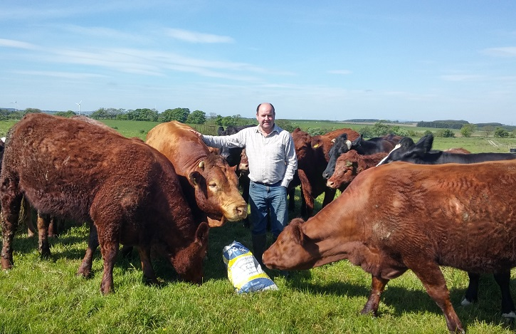 Man standing in a grassy field looking at camera, surrounded by cows who are trying to get into a bag of food