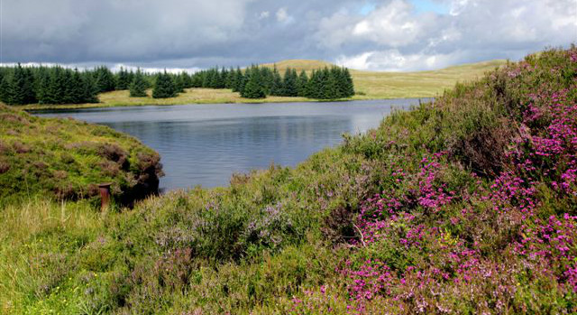 A loch and wildflowers within the Kilpatrick Hills