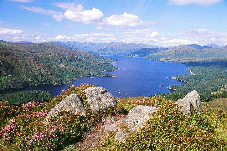 View of Loch Katrine from a heathery hilltop