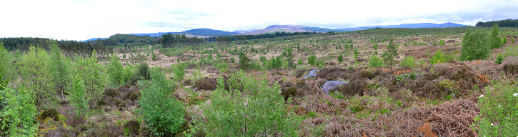 nightjar site panorama