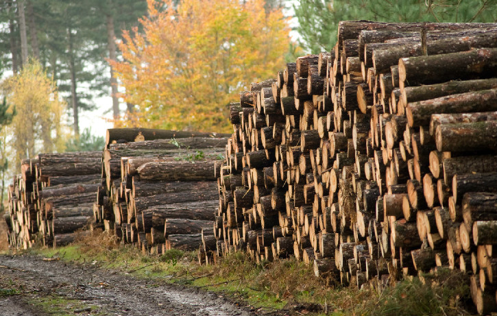 Timber stacks next to a forest tracks