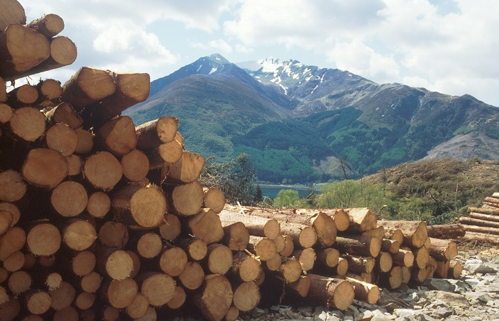 A stacked pile of timber with a view beyond to a snow capped mountain