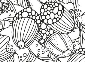 A colouring in sheet of acorns and oak leaves