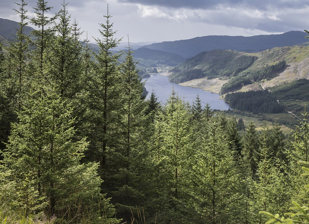 Douglas fir trees at Loch Doilet