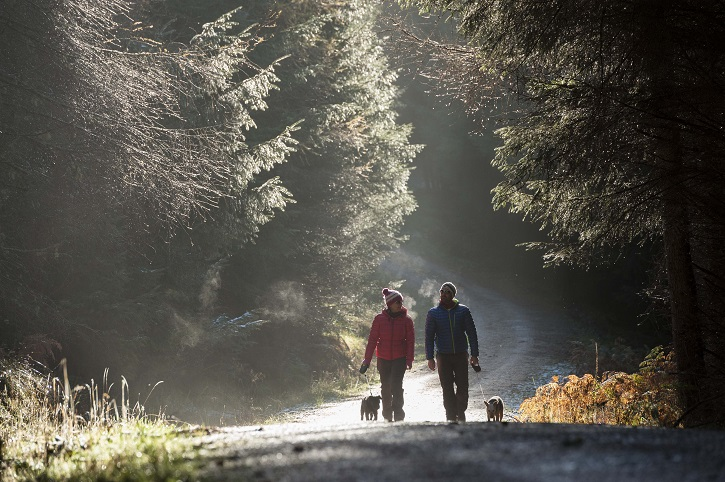 Two people wearing thick jackets and hats walking up a forest road towards camera with two dogs, surrounded by trees