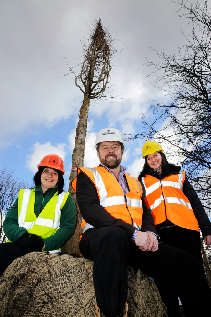 Three people in hi vis clothing looking at camera with solitary tree standing tall behind