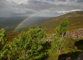 A rainbow over a heather-clad hill