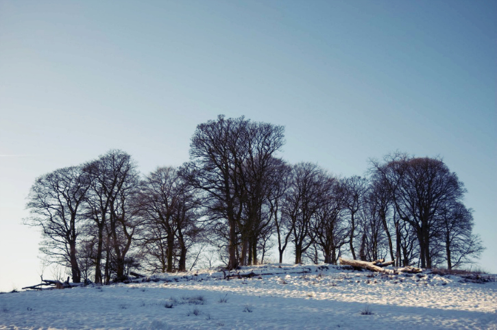 snow with trees on hill at callendar woods