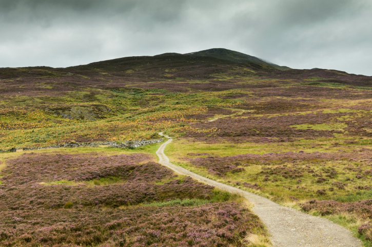 mountain path in heather at braes foss