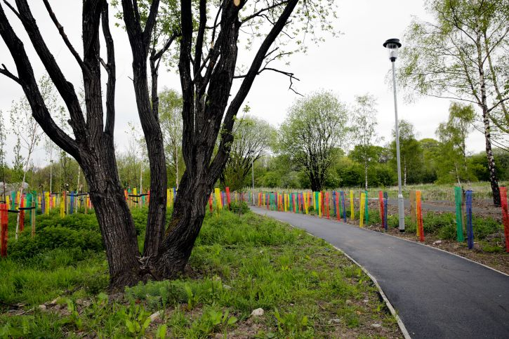 Tarmac path winding in passed a tree with many trunks with brightly colour railings beside