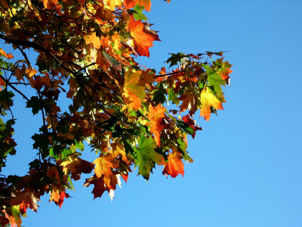 donna babington autumn leaves