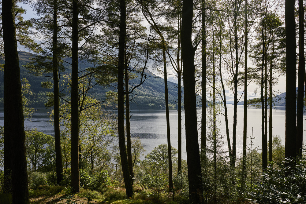 View of loch through trees