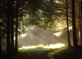 Sun shining through trees and illuminating grass