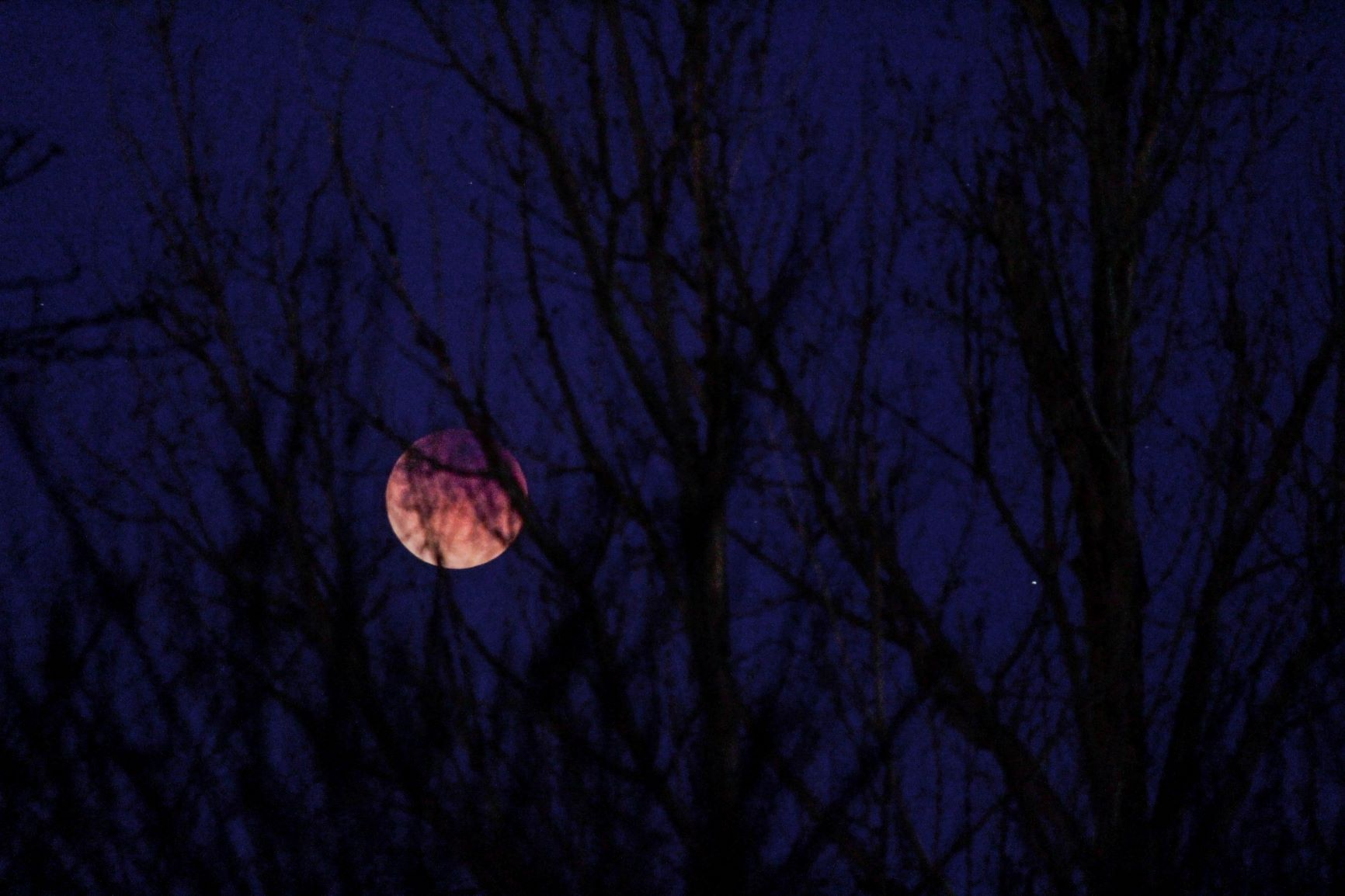 The moon showing in the night sky through some bare, dark tree branches.