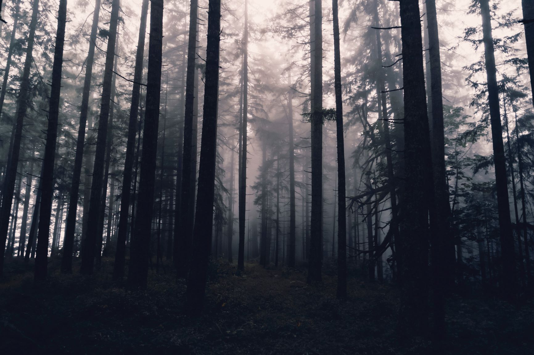 Eerie trees and mist deep in a forest