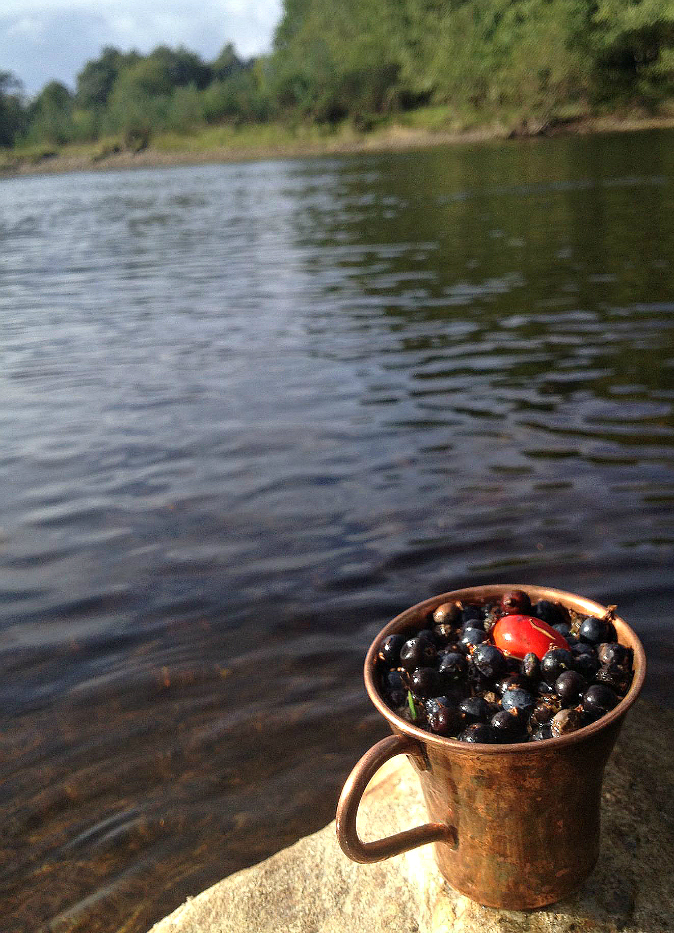 Juniper berries in a cup